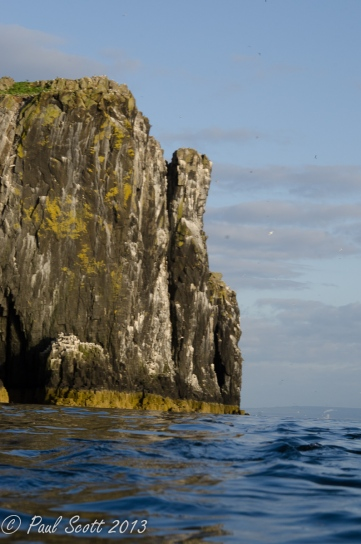 Isle of May June 2013