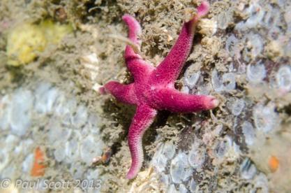 Bloody Henry - Starfish