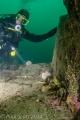 Velvet swimming crabs, May island