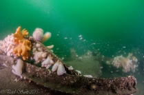 Arizona Wreck Elie July 2015-4417