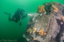 Arizona Wreck Elie July 2015-4422