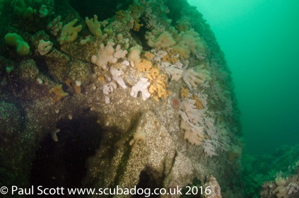 Boilers of the Glanmire Wreck at Saint Abbs Head