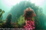The Boiler of the Meldon Wreck south of Mull