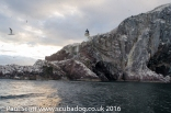 Bass Rock Mako July 2016-7395