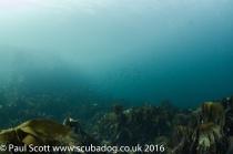 scourie-sept-2016-8458